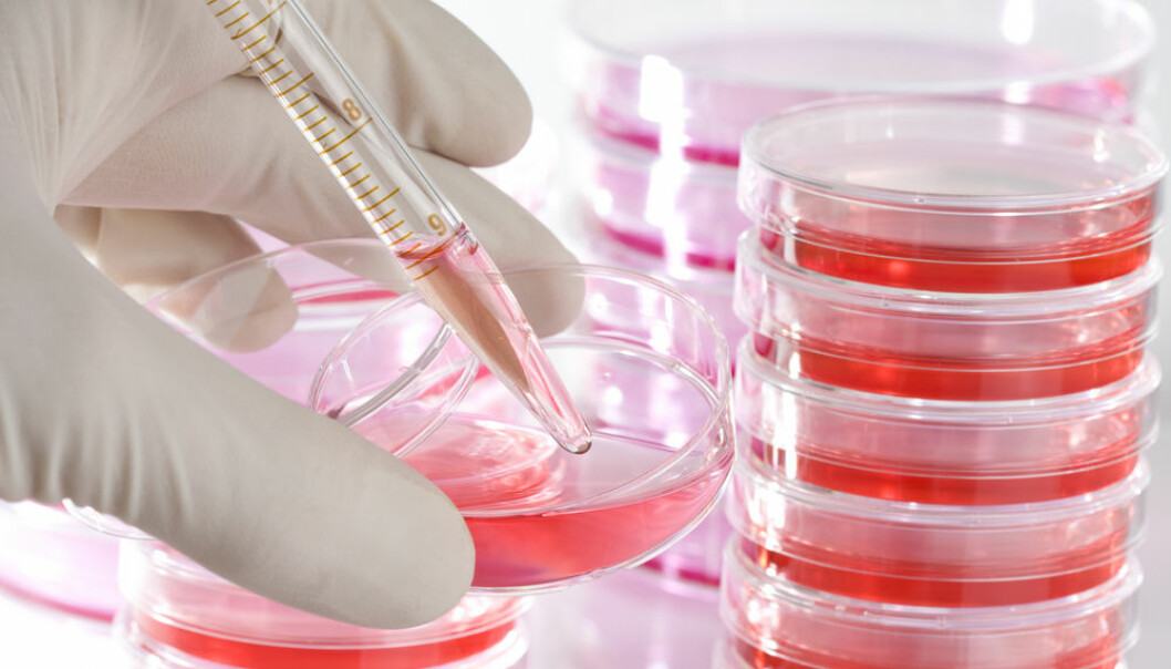 """Cancer research joins forces with parasitology to develop new cancer treatments: a malaria protein that may be used as a weapon against cancer. (Photo: <a href http://www.shutterstock.com/pic-19115449.html target=""""blank_"""">Shutterstock</a>)"""