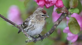 Climate and intensive farming push European birds into decline