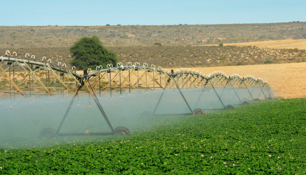 "New research shows that irrigated agriculture not only leads to less democratic societies, but also an unequal distribution of land and wealth that explains the lack of democratic development today in many regions of the world. (Photo: <a href=http://www.shutterstock.com/pic-13050313 target=""blank_"">Shutterstock</a>)"