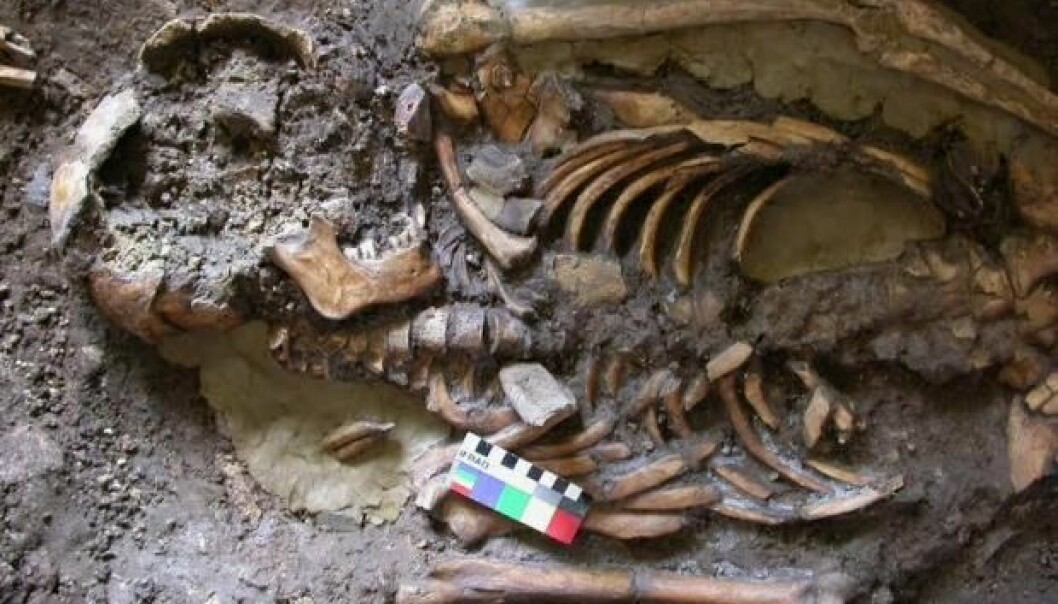DNA was recovered from a molar tooth of this skeleton--a man who was buried approximately 9,700 years ago in Kotias Klde cave in the Caucasus Mountains of Georgia, south of Russia and east of the Black Sea. (Photo: Eppie Jones / Nature)