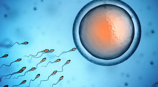Obesity can be passed on through the father's sperm