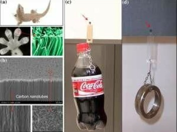Researchers have developed a super-adhesive material inspired by geckoes. The illustrations show: a) a gecko, gecko foot and gecko setae and spatulae. b) carbon nanotubes with nanotube 'spaghetti' on top. c) a 650 gram bottle of cola hangs suspended from a 4x4 mm tape of nanotubes on a glass plate. d) a 150 gram stainless steel ring hangs from the same 4x4 mm tape of nanotubes on sandpaper. (Illustration: Science/AAAS)