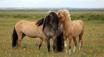 Wild horses lost their camouflage because of humans