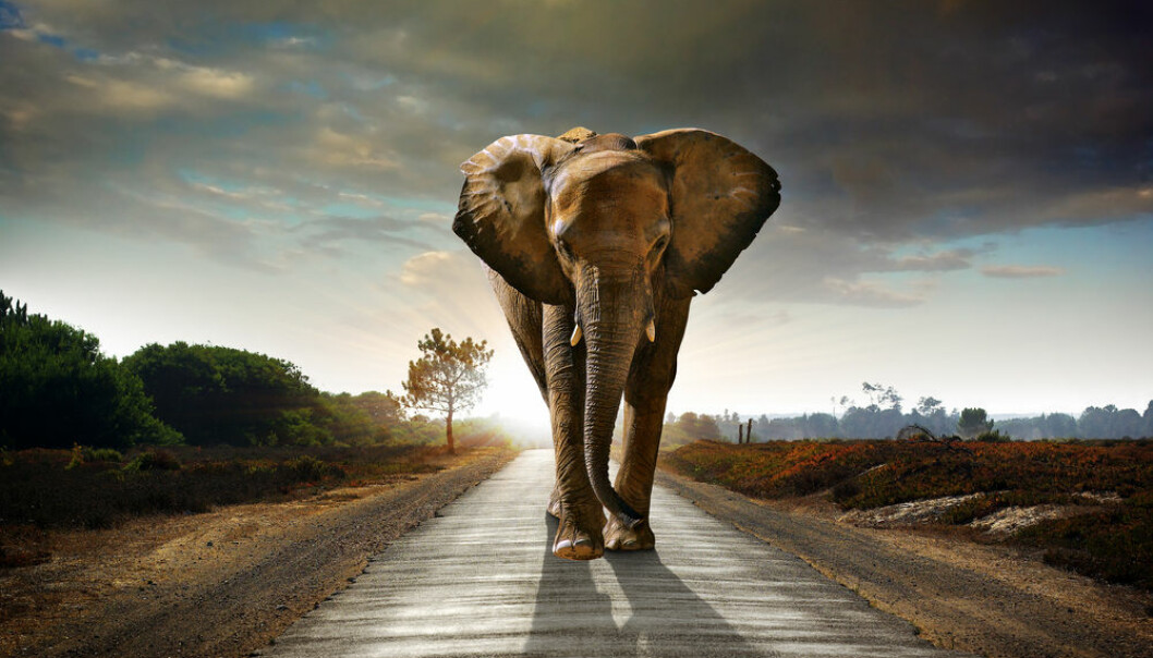 "The first animals arose sometime between 650 and 800 million years ago, but why did it take so long? New research suggests that lack of oxygen was not the cause for delay. (Photo: <a href=http://www.shutterstock.com/pic-60414424/stock-photo-single-elephant-walking-in-a-road-with-the-sun-from-behind.html target=""blank_"">Shutterstock</a>)"