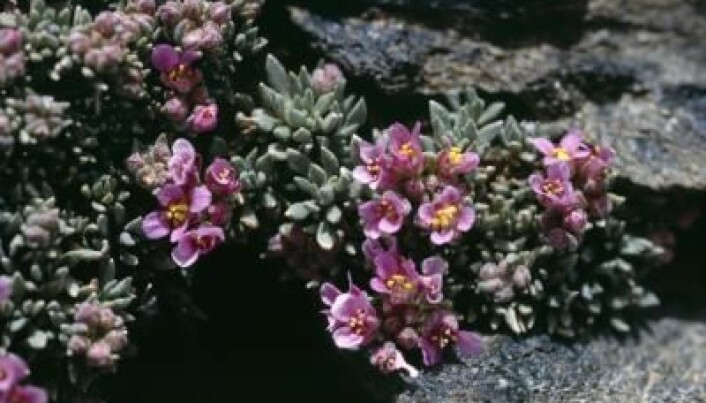 Climate change alters mountain plants