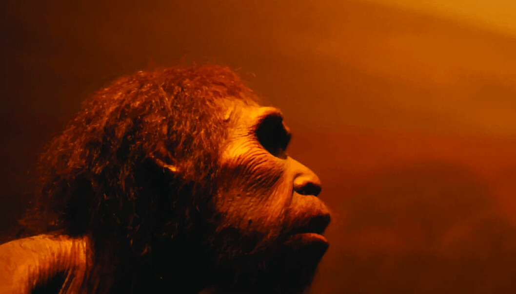 "Did Neanderthals ever make it to Scandinavia? If not, then it wasn't the climate that kept them away. (Photo: <a href=http://www.shutterstock.com/da/pic-230240842/stock-vector-prehistoric-man-vector-portrait.html target=""blank_"">Shutterstock</a>)"
