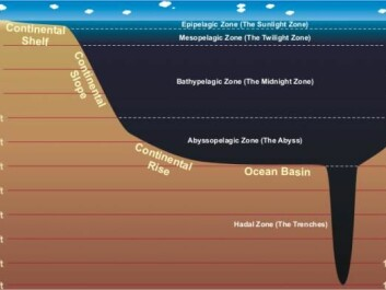 The sea is divided into five zones based on depth. A huge amount of fish that can be used to feed the earth's soaring population live in the mesopelagic zone (200 to 1000 meters deep) (Illustration: NOAA)