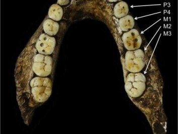 "Our early ancestors had very different teeth. Early African ancestors that predate the Homo genus had molars that generally increased in size further back along the jaw. In the Homo genus, this pattern switches, so that the first molar tooth (M1) became the largest, with the teeth on either side gradually becoming smaller. In the photo, P3 and P4 stand for premolar, C refers to canine teeth and M refers to molar teeth. (Photo: <a href=https://lawnchairanthropology.files.wordpress.com/2015/11/naledi-formula.png  target=""_blank"">lawnchairanthropology</a>)"