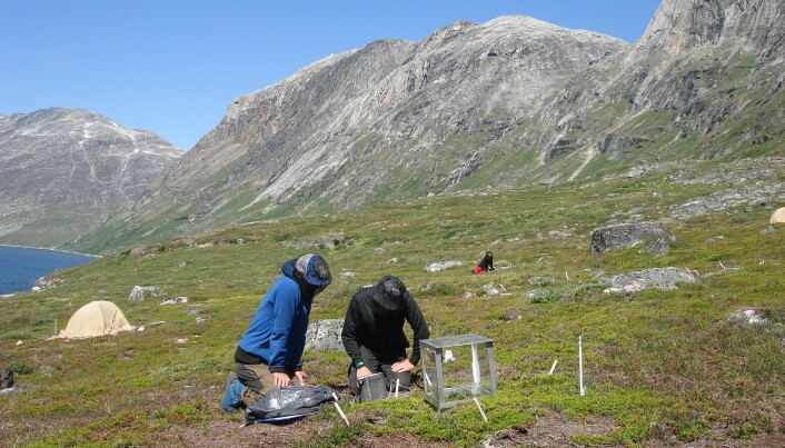 Arctic plants help cool the planet