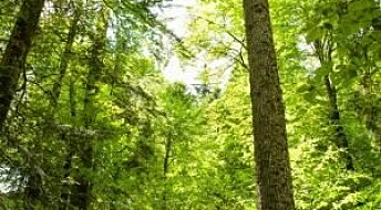 Scientists discover 'reverse photosynthesis'