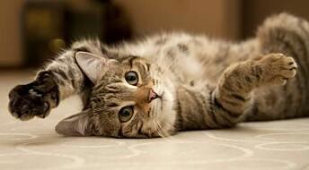 Cats cause conflict between neighbours