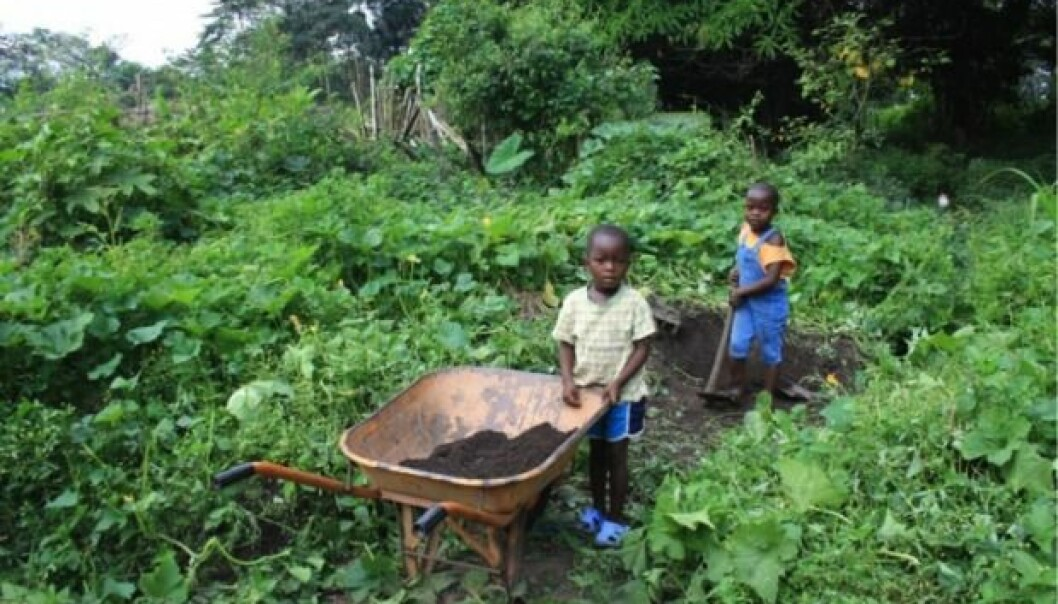 Indigenous people in West Africa have been turning nutrient-poor rainforest soil into fertile farming land for centuries, by adding charcoal and kitchen waste. (Photo: Victoria Frausin)