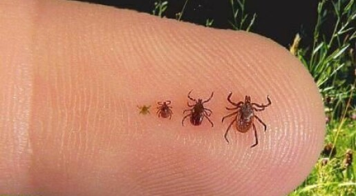 Tick sequencing may eradicate Lyme disease