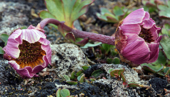 Arctic plants face an uncertain future