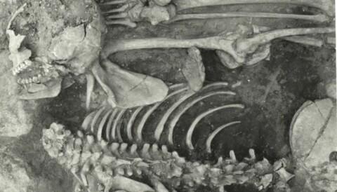 Vikings abused and beheaded their slaves
