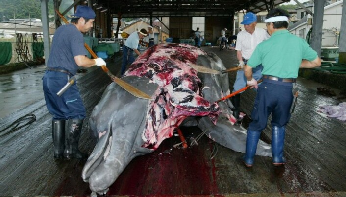 Quota system for preventing whaling