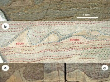 Close-up view of the stromatolites from Isua, Greenland (a and b) compared with stromatolites from Australia (c and d). (Photo: Nutman et al./Nature)