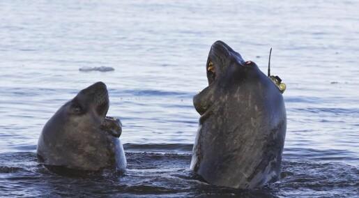 Elephant seals help scientists study climate change