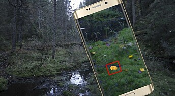 Finding mushrooms with your mobile phone