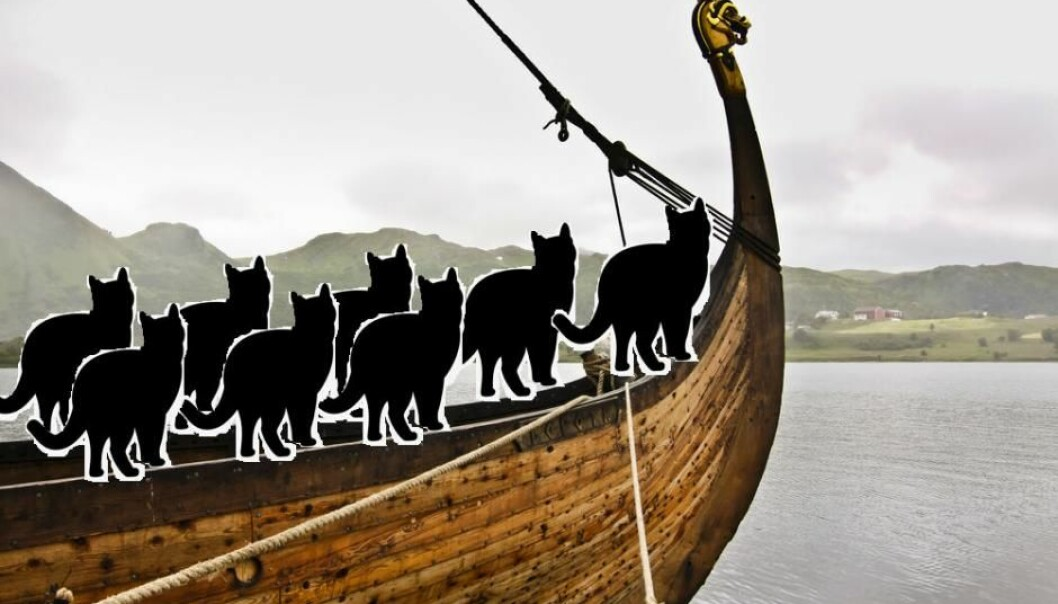 Vikings took cats with them on their travels to keep rodents in check. (Photo: Shutterstock)