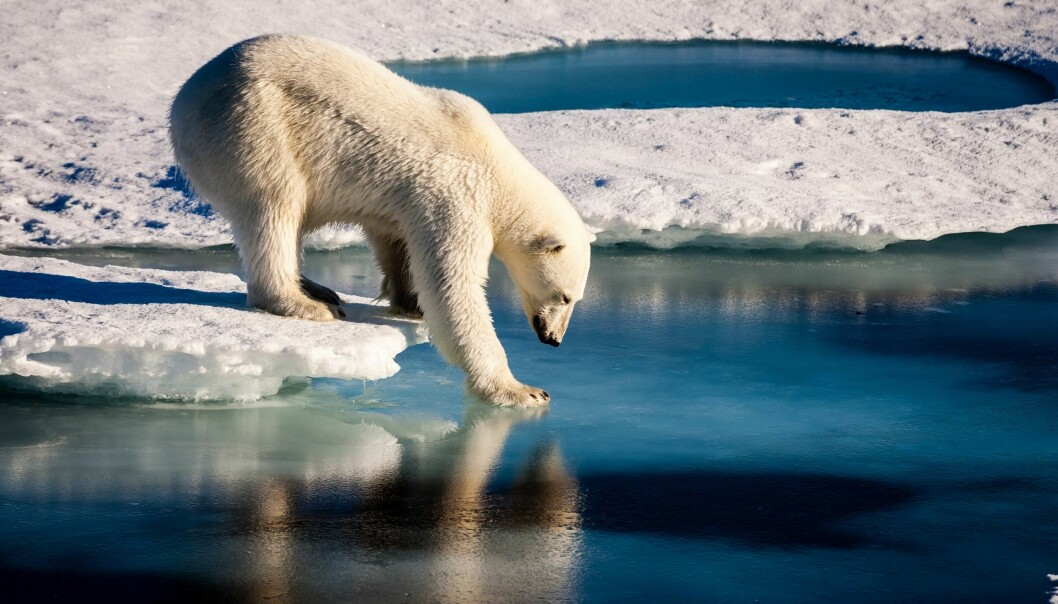 It has been another record-breaking warm year and Arctic sea ice remains well below the long-term average.  (Photo: Mario Hoppmann (distributed via imaggeo.egu.eu))