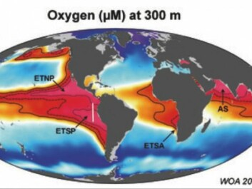 The oxygen minimum zone, shown by pink shading, is where the oxygen content is so low that it is referred to as 'the dead zone'. (Illustration: Max Plank Institute)