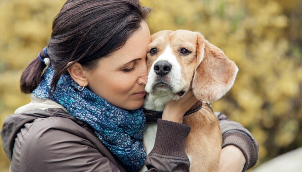 Is a dog's desire to be with humans guided by its genes? Certainly, and Swedish scientists have now found out which ones. Illustrative photo: Soloviova Liudmyla, Shutterstock/NTB scanpix)
