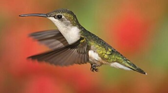 Bird study reveals a key assumption in evolution theory is false