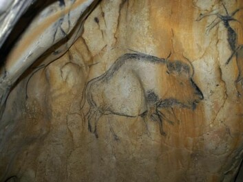 Cave painting of a steppe bison from the Upper Paleolithic period, around 35,000 years ago. The painting was discovered in the Chauvet-Pont-d'Arc cave in Ardèche, southern France. (Photo:Carole Fritz)