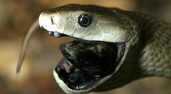 How biotechnology could offer hope for snakebite victims