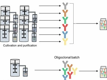 Schematic representation of two strategies for the manufacture of oligoclonal antibody mixtures by cell cultivation. (Photo: Andreas Hougaard Laustsen)