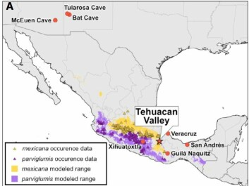 The map shows how teosinte-subspecies spread around Mexico. Important archaeological sites (red circles) and the Tehuacan valley, where the 5,000-year-old corncob was discovered. (Illustration: Ramos-Madrigal et al./Curr. Biol)
