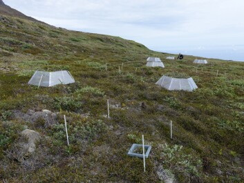 Scientists from the Center for Permafrost at the University of Copenhagen use open-top greenhouses in Greenland to study how Arctic plants and soils respond to climate change. (Photo: Bo Elberling)