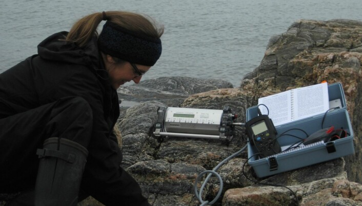 Greenland seaweed helps combat ocean acidification