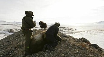 Scientists risk their lives in the wilds of Greenland