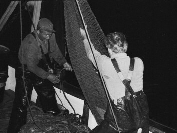 Fishers from Kuggören at the Swedish Baltic emptying their trawlnet. (Photo: Swedish Museum for Maritime History)
