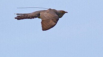 Scientists solve old mysteries of bird migration routes