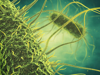 Scientists are harnessing the power of a group of viruses known as bacteriophages to combat some of the most prevalent food-borne pathogens, such as salmonella. (Photo: Shutterstock)
