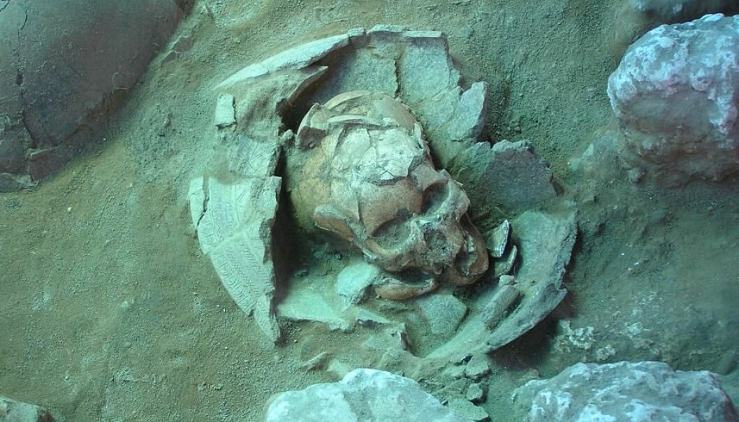 The 3,000-year-old skull preserved in a jar is characteristic of agriculturalist Lapita culture. DNA from the skull has now identified the original sailors who conquered the Pacific. (Photo: Frederique Valentin)