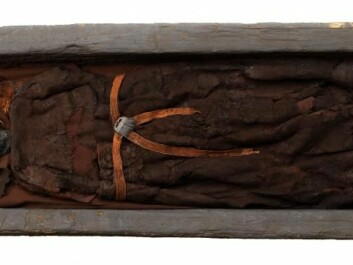 Skrydstrup Woman was buried in an oak-coffin, which helped to preserve her remains. (Photo: The National Museum of Denmark)