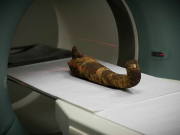 The ibis bird mummy on its way into the scanner. (Photo: Kirstine Jacobsen / ScienceNordic)