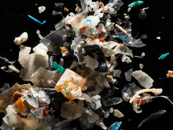 "Scientists estimate that the Greenland Sea and the Barents Sea contain between 100 and 1,200 tons of plastic. (Photo: <a href=""http://www.chesapeakebay.net/blog/post/photo_essay_microplastics_in_the_chesapeake_bay"" target=""blank_"">Chesapeake Bay</a>)"
