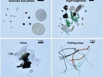 Examples of the types of plastic found in the Arctic Ocean. Most of the samples were comprised of rigid fragments, but they also found plastic film used to wrap goods and food, fishing line, foam used to pack goods for transport (not shown), and granules from cosmetics. (Photo: Andres Cozar)