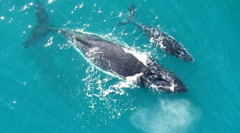 Hear a whale calf speak to its mother