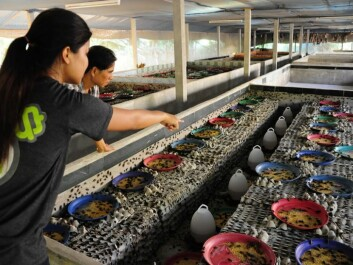 Thailand is the biggest producer of insects. In total there are 20,000 insect farms in the country. (Photo: Afton Halloran)