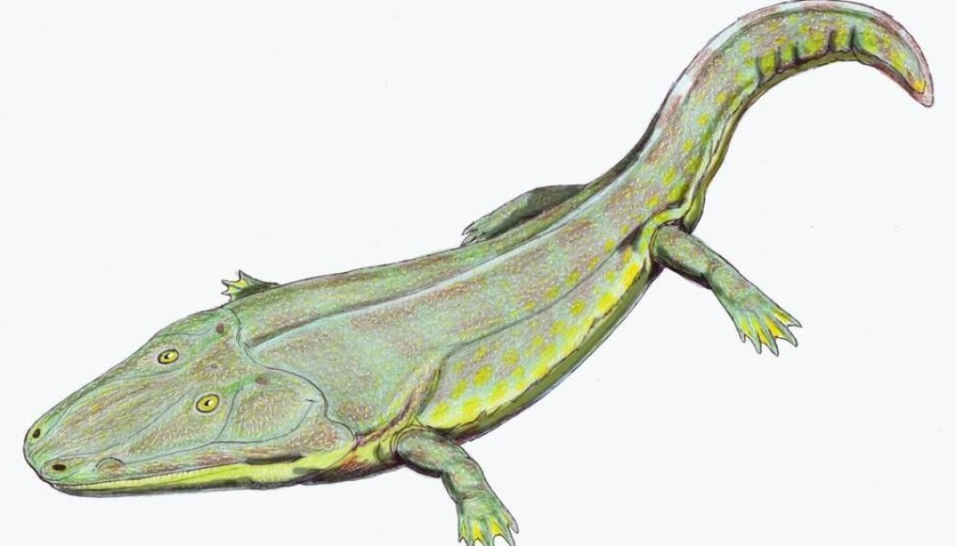 A cranium discovered in east Greenland belonged to a 2.5 metre-long amphibian that lived 2.5 million years ago. (Illustration: Museu da Lourinhã)