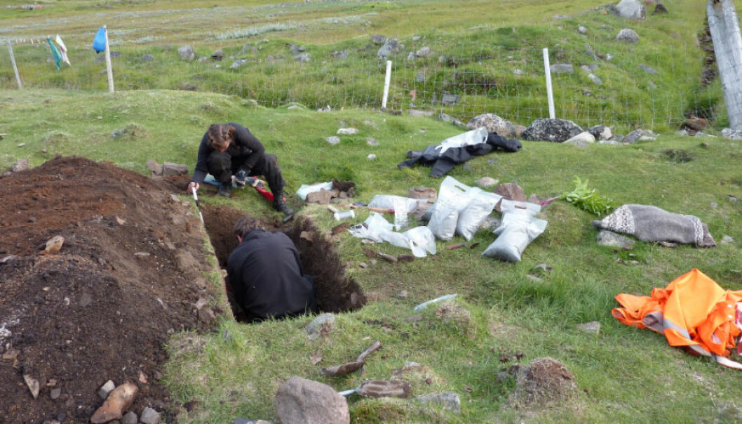 Excavating a rubbish heap at a Viking farm on Greenland. Peter Steen Henriksen is in the excavation hole, while archaeologist Caroline Polke Paulsen works outside. One of the sample bags contains the barley remains that the researchers found. (Photo: Inge Kjær Kristensen).