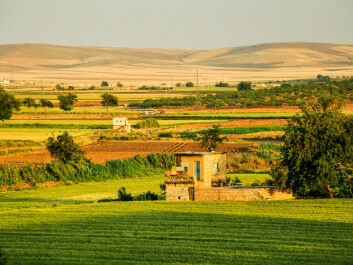 Green fields in western Syria, before the civil war started. (Photo: Jakob Fischer / shutterstock)