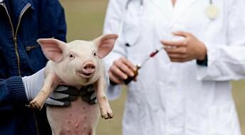 CRISPR breakthrough ignites hope of using pigs as organ donors