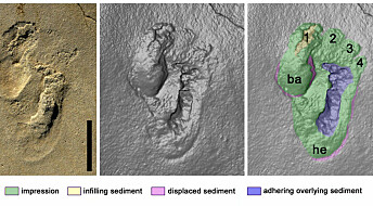 Our controversial footprint discovery suggests human-like creatures may have roamed Crete nearly 6m years ago